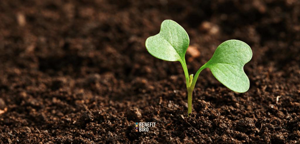 Potpora za razvoj malih poljoprivrednih gospodarstava