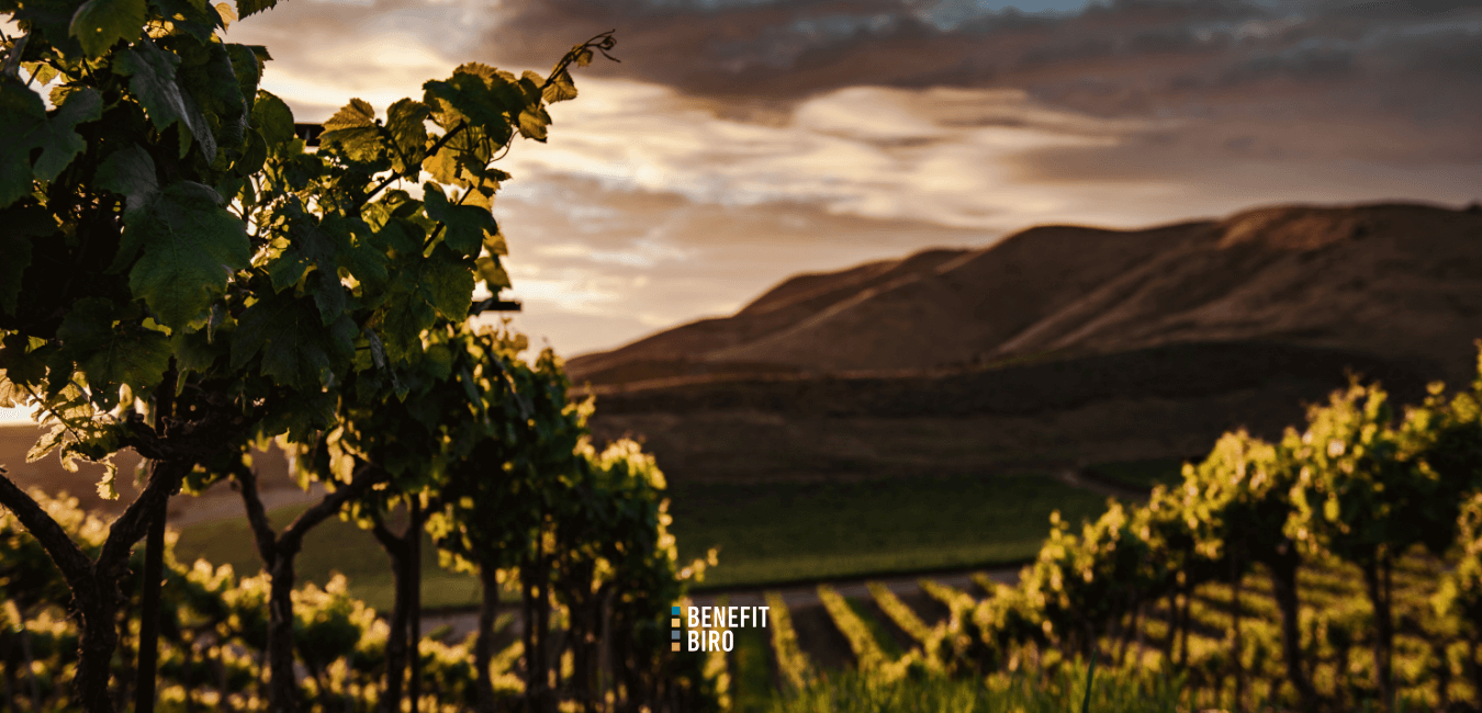 Otvoren natječaj za mjeru restrukturiranje i konverzija vinograda logo