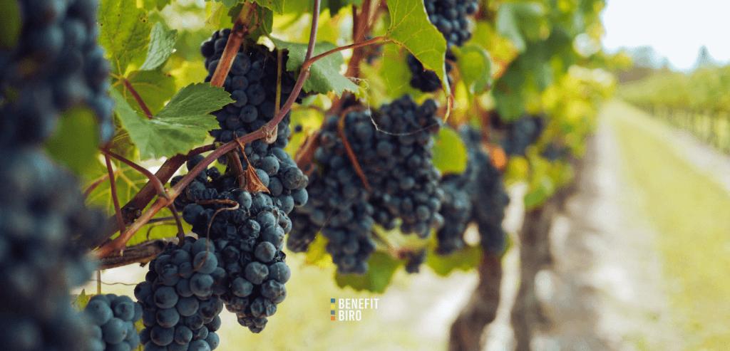 Natječaj za dodjelu sredstava - vinogradari