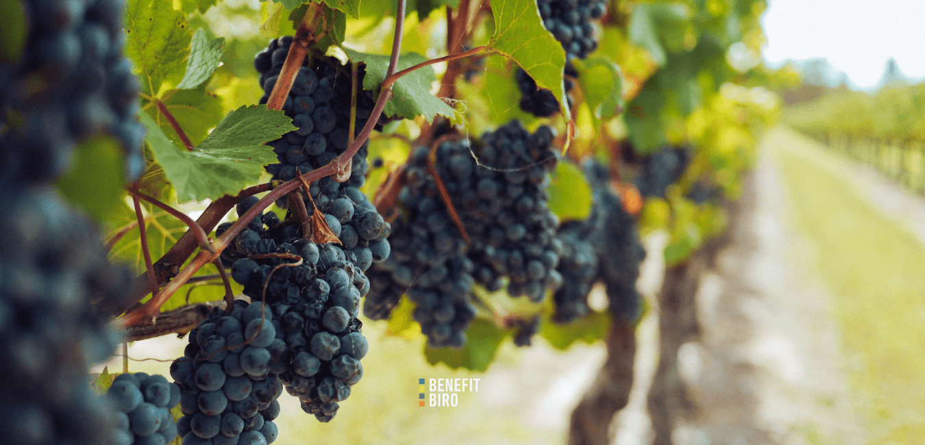 Natječaj za dodjelu sredstava – vinogradari logo
