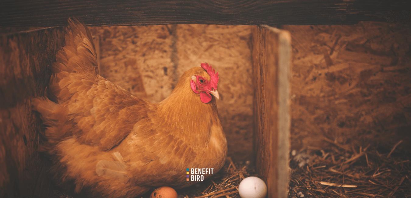 Alternativni načini držanja kokoši nesilica – peradarstvo logo